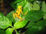 Amphibian Crisis